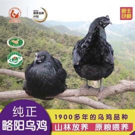 略阳乌鸡 黑禾人家真空冷鲜乌鸡  散养乌鸡 礼盒装